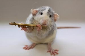http://karasjoblom.com/wp-content/uploads/2010/03/Froppy-Rat-Van-Deelen2-300x199.jpg